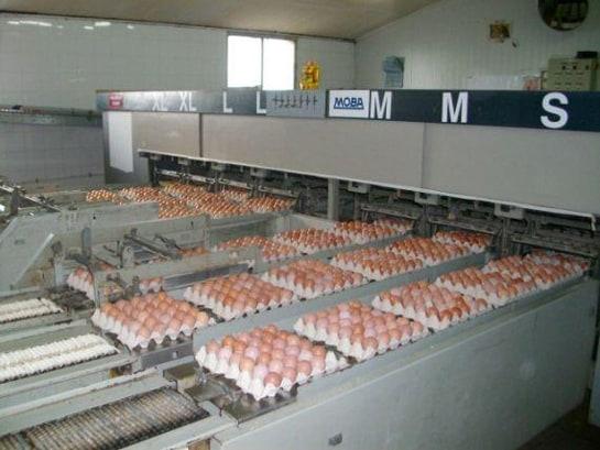 Los huevos de Avícola Redondo han logrado prestigio entre los mejores restaurantes y hoteles de Madrid