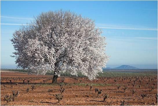 La Primavera Enogastronómica exalta los productos de la Ruta del Vino Ribera del Guadiana