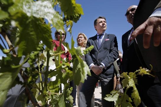 El presidente madrileño, Ignacio González, visita los viñedos de la bodega El Regajal, en Aranjuez