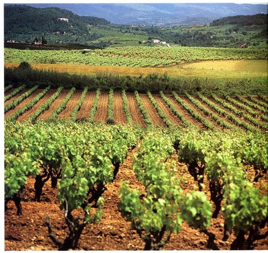La Ruta del Vino y el Cava del Penedès, la más visitada en 2012