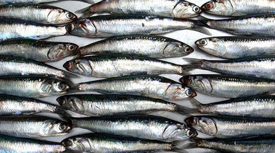 Beneficios-del-aceite-de-pescado1